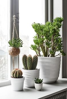 Photo: bindefeldt ab via trendspanarna love plant house plants decor, plant decor Cacti And Succulents, Potted Plants, Cactus Plants, Indoor Plants, House Plants Decor, Plant Decor, Bedroom Plants, Cactus Y Suculentas, Houseplants