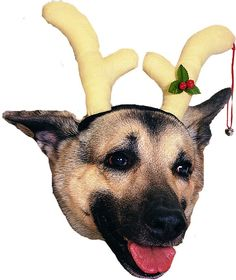 pet costume accessory: reindeer dog antlers