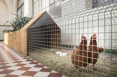 Poulailler urbain / avec carré potager - DAILY NEEDS - Cassecroute