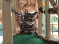 DomusfeliS special playzone for cats #catcastle #cattower #catcondo #cattoy #designforpets #catlovers #felinelovers #catsculptures #catenclosure #cattoy Cat Castle, Cat Enclosure, Cat Condo, Cat Toys, Cat Lovers, Sculptures, Cats, Animals, Gatos