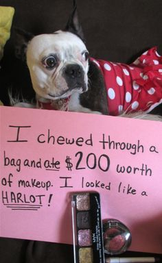 Dog Shamed Boston Terrier  @Anna Miller   this reminded me of your dog and how much makeup you have!