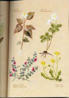 Gallery.ru / Фото #37 - Flower garden - simplehard