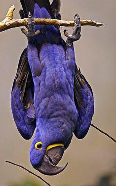 Высоко сижу-далеко гляжу:) Funny Birds, Cute Birds, Pretty Birds, Beautiful Birds, Animals Beautiful, Animals Images, Animals And Pets, Cute Animals, Colorful Parrots