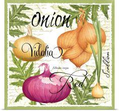 Botanical Onion Photo Canvas Print   Great Big Canvas