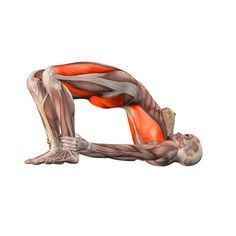 Bridge pose - Setu Bandhasana - Yoga Poses   YOGA.com