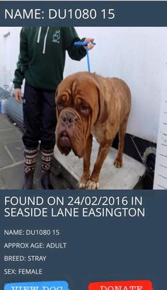 This female dog found was on the 24/2/16 in Seaside Lane Easington. please share and help find her owner!