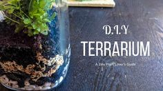 A how-to guide to make your very own terrarium! How To Make Terrariums, Terrarium Diy, Make It Yourself, Plants, Life, Diy Terrarium, Planters, Plant, Planting