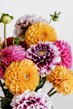 Beautiful Festive Colorful Dahlia Flowers! . . Beautiful Fall Flower Arrangements Shop AVAS FLOWERS and Save *Up to 45% OFF + Free Local Delivery! Follow the Link Below! . . XO, AVAS FLOWERS
