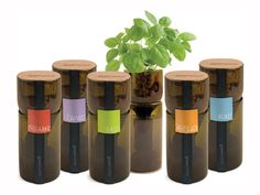 Grow Bottles - made from recycled wine bottles, an easy way to grow herbs in your apartment. They use hydroponics to produce herbs year-round.
