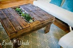 Table with succulents
