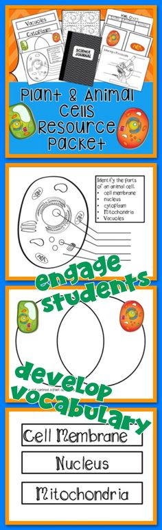Animal Cell Coloring Page Answers : Plant cell parts worksheet with word bank name what makes you