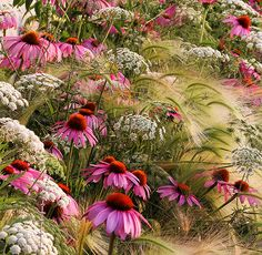 The overall winner of the IGPOTY Award 7 is Italian garden designer Rosanna Castrini, for her entry My Prairie Garden – pictured above – which also won her first place in the Beauty of Plants category. 12937_Castrini_RGB