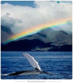Whale Watching on Maui: http://www.mauigoodness.com/2015/03/20/whale-watching-maui/