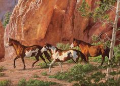 horses in canyon | Horse Canyon