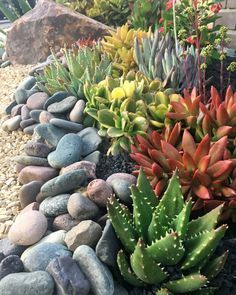 Best Ideas For Garden Succulent Landscaping 35 on Home Architecture Tagged on Best Ideas For Garden Succulent Landscaping Succulent Rock Garden, Succulent Landscaping, Landscaping With Rocks, Succulents Garden, Backyard Landscaping, Landscaping Ideas, Succulent Outdoor, Landscaping Blocks, Backyard Decks