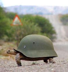 Tortoise Battle Armour