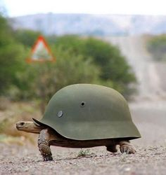 This tortoise is ready for the Zombie Apocalypse