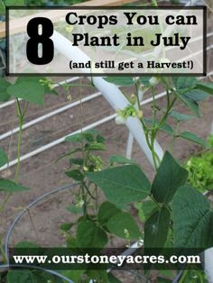 What can you plant in July