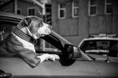 500px / Bad-ass Dog by Sammuel Lopez