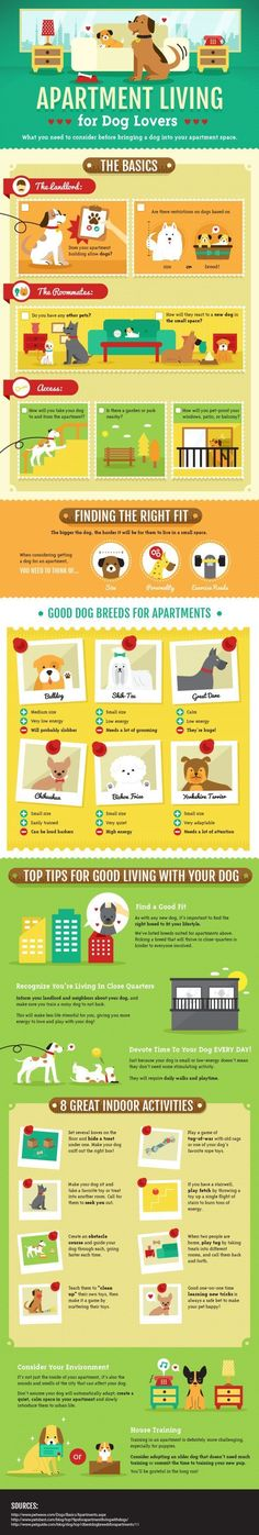 Tops tips for good living with your dog. Good dog breeds for apartments 8 great indoor activities Dog Care & Health Tips for happy life -- Repin to your own inspiration board -- #DogAccessories