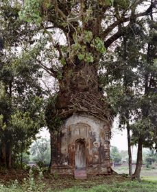 16th Century Terracotta Temple(Banyan Tree) Attpur, West Bengal, 1998-Laura McPhee -- Find articles on #India , #Adventure #Travel , #Outdoor Pursuits, and #Extreme Sports at http://adventurebods.com or find us on http://facebook.com/adventurebods