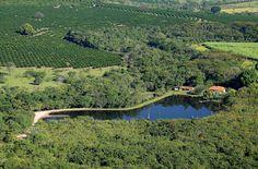 Plantação de Café, Brasil