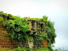 Comment What You See!! 😀 See carefully..  Pic Location : Nagara Fort, after an amazing experience of Kodachadri Trek Pic credit : Mithun  Follow us on Facebook, Twitter, Instagram and Youtube Twitter : https://twitter.com/nature_walkers Instagram : https://www.instagram.com/connectwithnaturewalkers/ Youtube : https://www.youtube.com/channel/UCaxjHxPctg8cwNu7i-OqwjQ