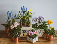 Discover the fresh power of plants! Blooming Plants, Blooming Flowers, Spring Flowers, Plantes Feng Shui, Potted Plants, Indoor Plants, Flowering Plants, Garden Plants, Yucca