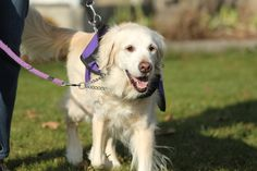 National Service Dogs for Autism Improve Lives of Families!  http://talenthounds.ca/featured-stories/autism-service-dogs-featured-on-talent-hounds/