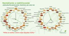 Namáčanie a nakličovanie. Ako dlho namáčať a nakličovať semienka, obilniny, orechy a strukoviny?