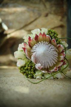 Love this native Australian wattle wedding bouquet Protea Wedding, Floral Wedding, Bush Wedding, Dream Wedding, Bride Bouquets, Floral Bouquets, Protea Bouquet, King Protea, Australian Native Flowers