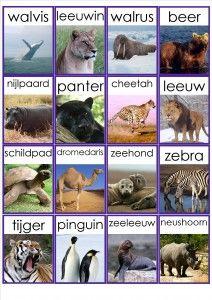 dieren in het wild memorie