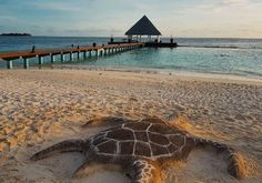 Coco Palm Bodu Hithi - turtle Sand Art, Maldives, Turtle, Palm, Beach, Water, Outdoor, The Maldives, Gripe Water