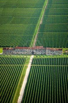 Vineyard | Veneto Italy
