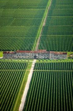 Fields of vines and an old country manor, Veneto Italy.