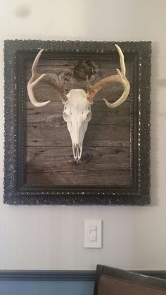 Antique frame, barn board and my 8 pt buck make for a great mount.