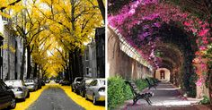 15+ Of The World's Most Magical Streets Shaded By Flowers And Trees | Bored Panda