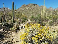 Springtime Hiking | Sabino Canyon | Tucson | Arizona | Outdoor Adventure | Things To Do | Photo via Instagram by @blueberriedawn |