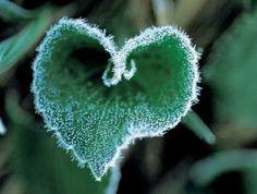 Frozen heart  #Love #Heart #Nature    www.facebook.com/EssencetoSuccess