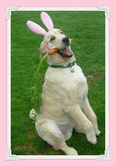Pups love carrots! So cute.
