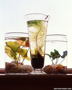 water+garden - go to aquarium store and buy your fav aqua plant! Put in your fave glass container