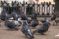 birds St.Petersburg Russia