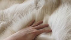 This exclusive fox fur blanket begs to be touched! White Fur Coat, Fox Fur Coat, Fur Clothing, Fur Accessories, Fur Blanket, Fur Throw, Soft Blankets, Palomino, Fur Fashion