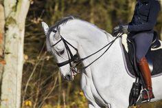 Uit onderzoek blijkt dat nog steeds 70 procent van de ruiters gebruik maakt van de Rollkur-methode. Een op het oog pijnlijke methode, maar vinden de paarden dat ook? In het volgende filmpje werd er aan paardengevraagd wat ze liever hebben.…