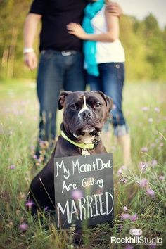 You have to incorporate the dogs, in the engagement photos and the wedding!