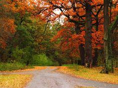 imágenes, fondos de pantalla de otoño, vector carretera, fotos de intersección, árboles fondos, imágenes encrucijada, el materi
