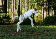 Therapy Horse Stardust 2 | Debbie Garcia | Flickr