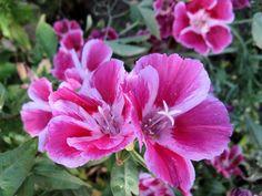 Sommerblüten in Pink und Rose - schöne Tage im Garten und dazu ein Glas…