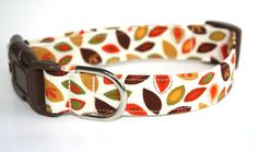 Nice fall collar - Wesley will be stylin' for Thanksgiving.