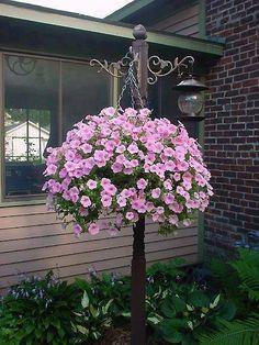 Hanging flowers in the garden